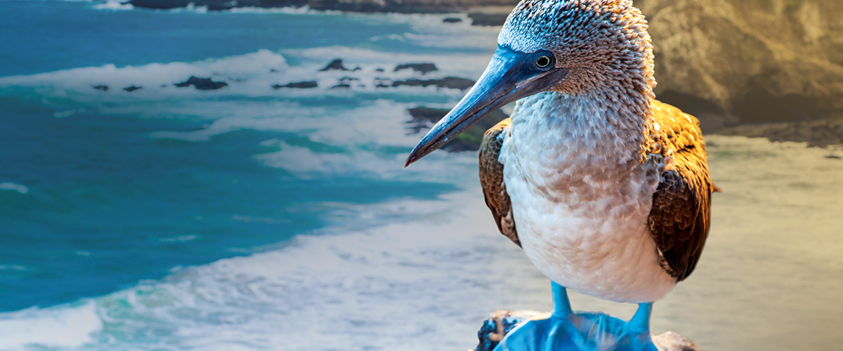 """<div style=""""display:inline"""" itemprop=""""name"""" > Let's Go to the Galapagos! </div>"""